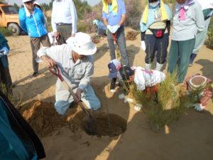 植林 緑化活動 クブチ沙漠